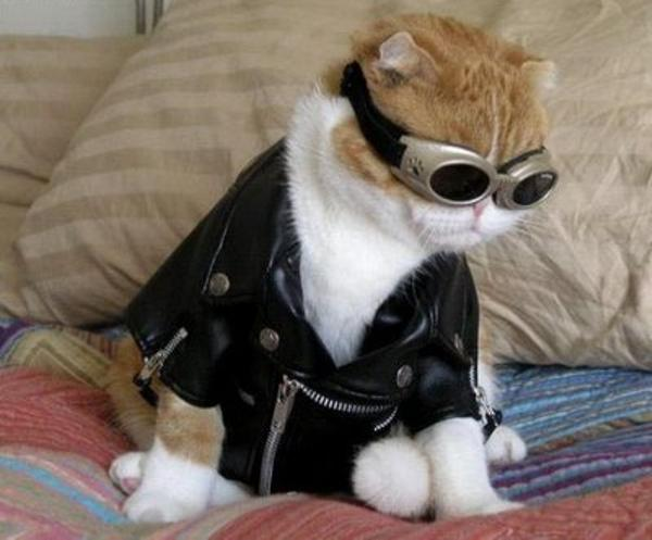 aviator-cat-costume