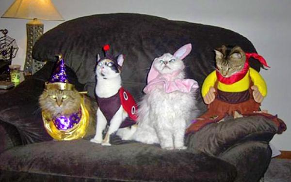 Awesome Cat Costume Party Picture