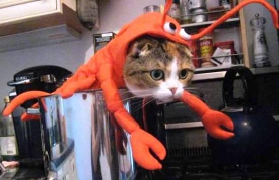 cat-costumes