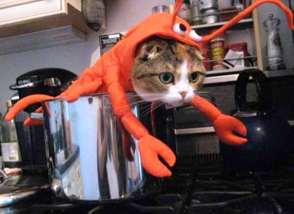 cat-lobster-costume