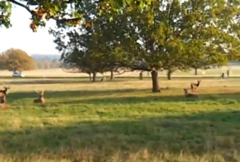 deer-lab
