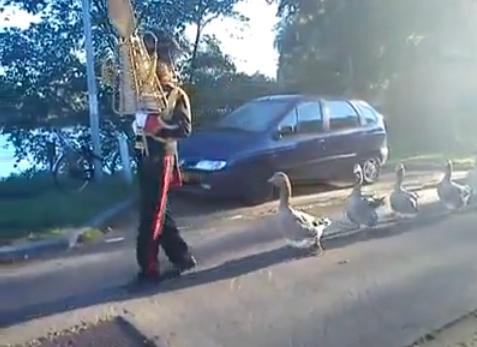 goose-parade