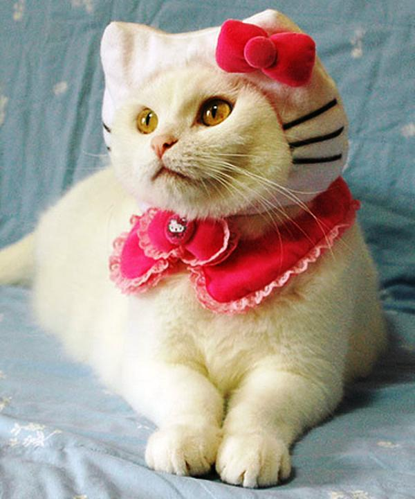 hello-kitty-cat