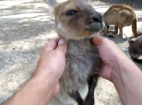kangaroo-massage