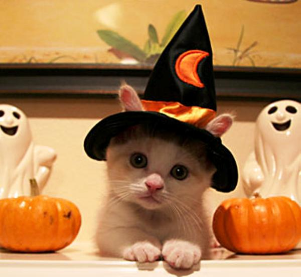kitten-witch