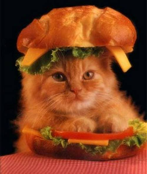 kitty-hamburger-costume