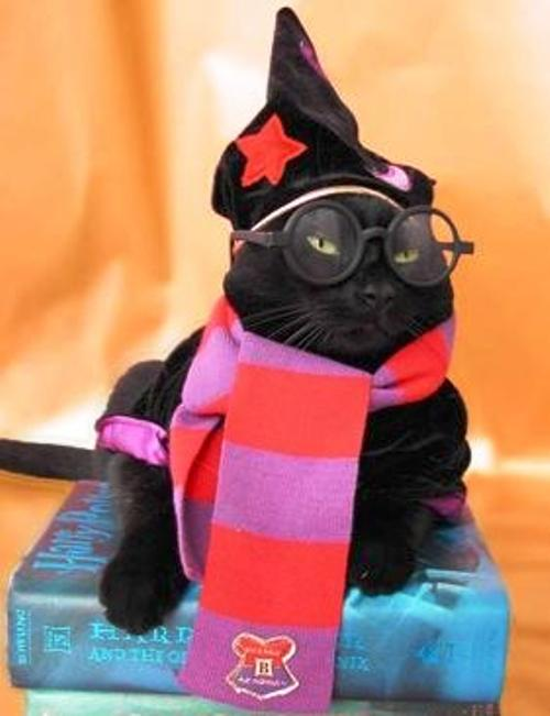Cat Dressed As Harry Potter