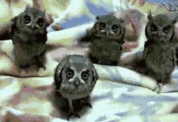 owl-quartet
