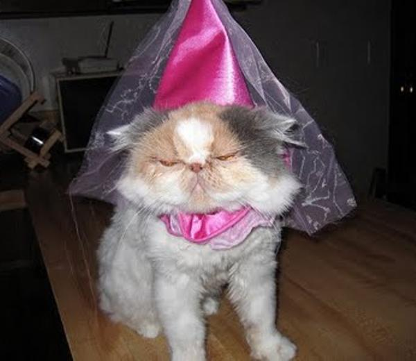princess-cat-costume