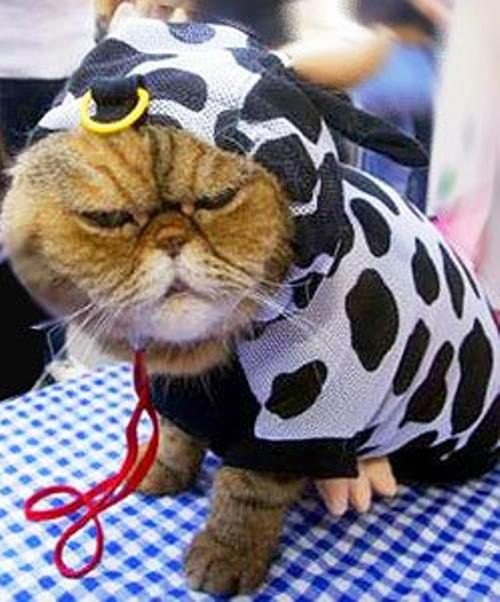 spotted-cat-costume