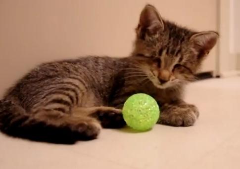blind-kitten