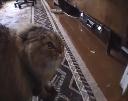 cat-says-no