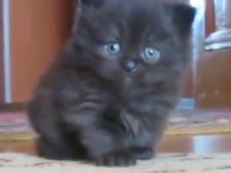 cute-kitten-sad