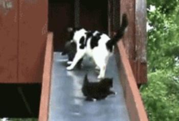 kittens-up-kittens-down