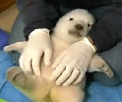 tickling-baby-panda