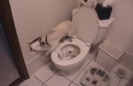 cat-toilet