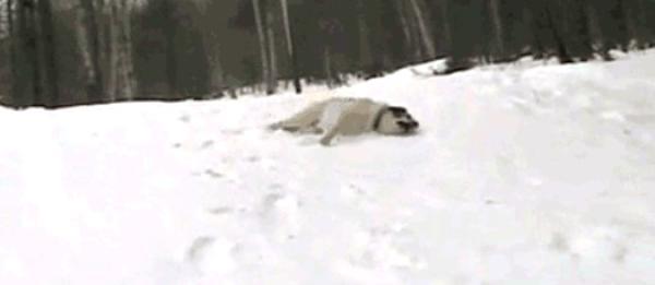 dog-first-snow