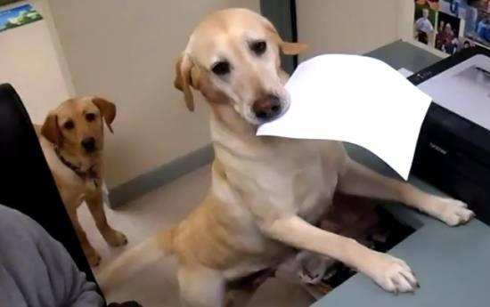 dog-receipt