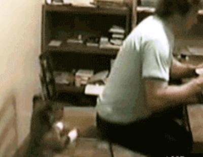 dog-tricks-owner