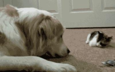 kitten-bops-dog
