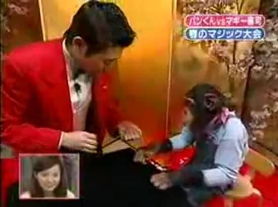 magic-tricks-chimpanzee