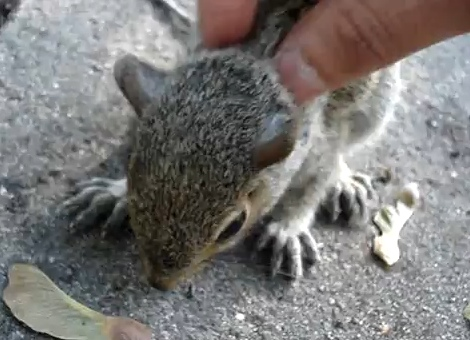 squirrel-massage