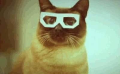 three-dimensional-cat