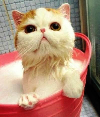 cute-cat-bath