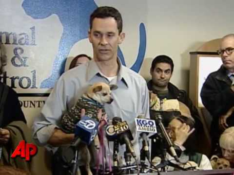Video thumbnail for youtube video Pop Culture To Blame For Chihuahua Abandonment?