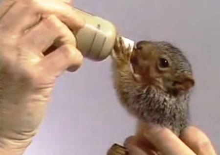 bob-ross-feeds-squirrel