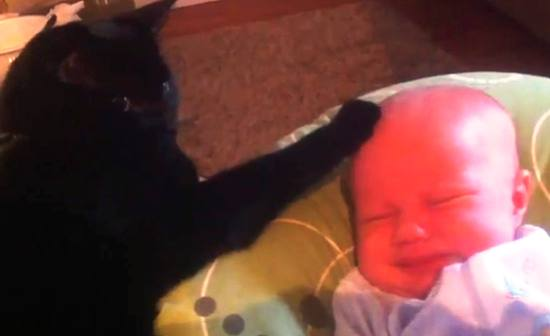 cat-comforts-crying-baby