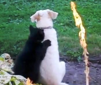 cat-massages-dog