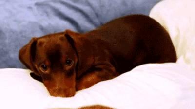 cutest-puppy-gif-ever