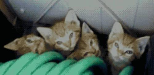 hidden-kittens