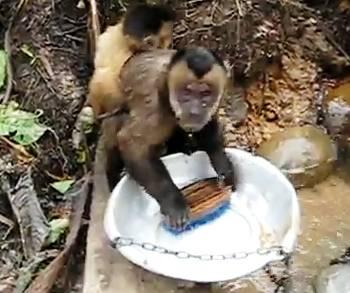pete-monkey-dishwasher