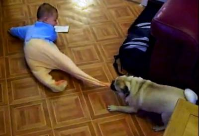 pug-baby-playtime