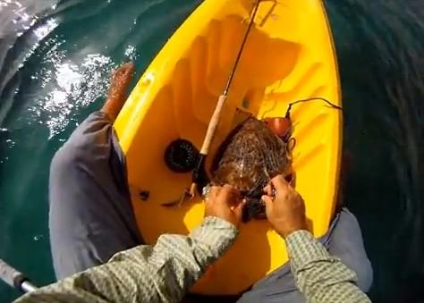 turtle-rescue