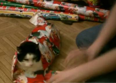 wrap-christmas-cat