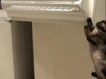 cat-freezer