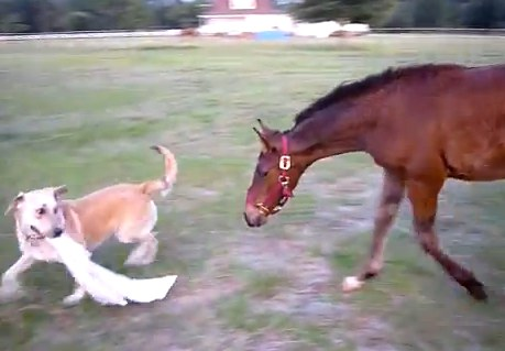 dog-horse-tag
