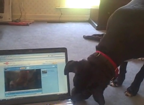 dog-meets-internet