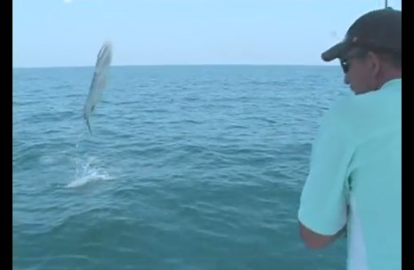 You Don't Catch A Barracuda, It Catches You