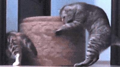 cat-teamwork