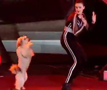 crazy-doggy-dance-talent