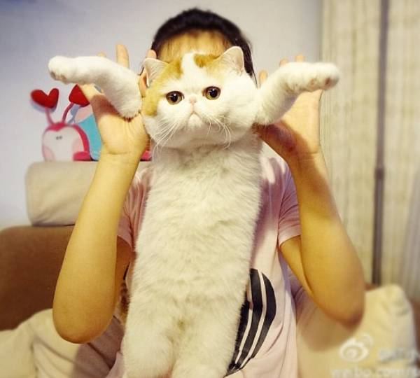 cutest-cat-ever-snoopy-body