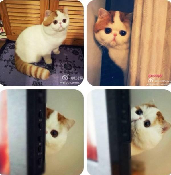cutest-cat-ever-snoopy-doors