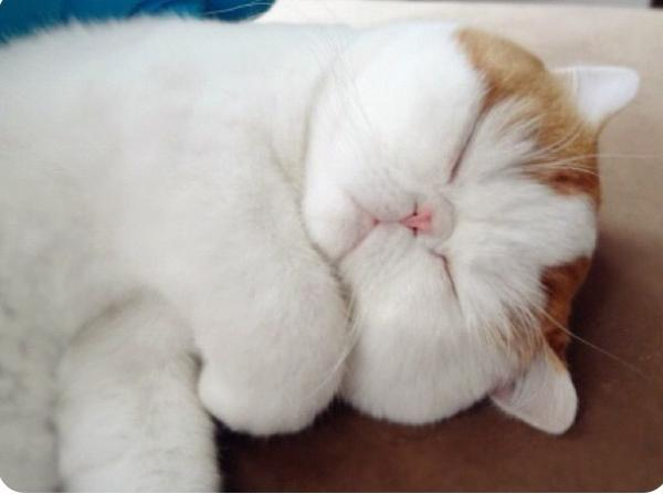 Snoopy Cat Sleeping