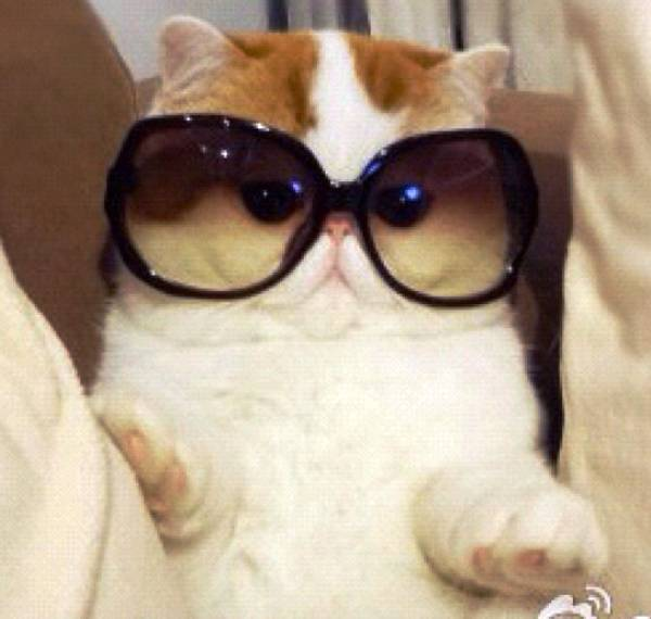 cutest-cat-ever-snoopy-sunglasses