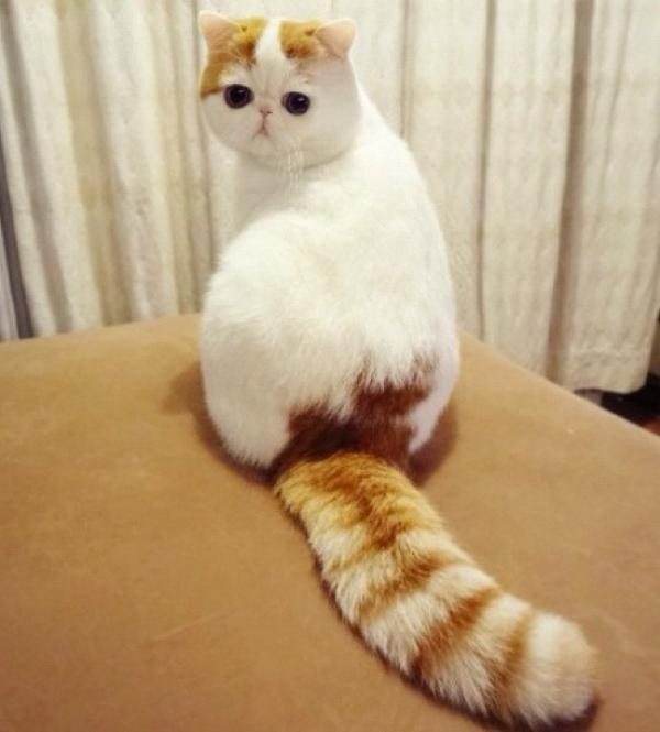 Cutest Cat Ever Snoopy Tail