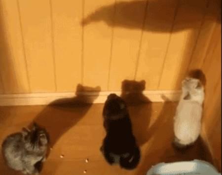 get-it-cats